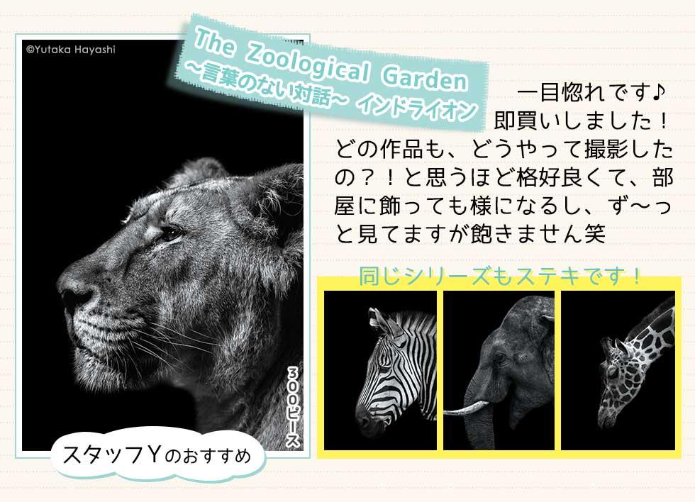 The Zoological Garden 〜言葉のない対話〜 インドライオン